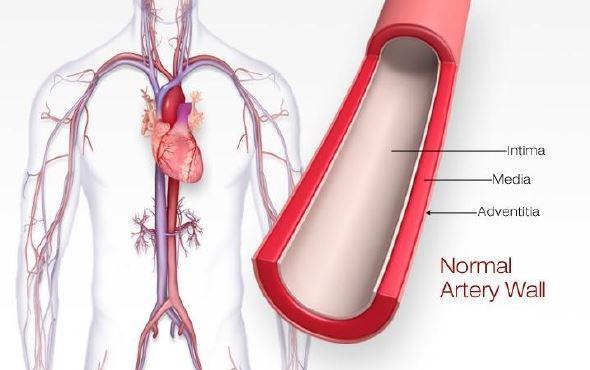 Health Artery