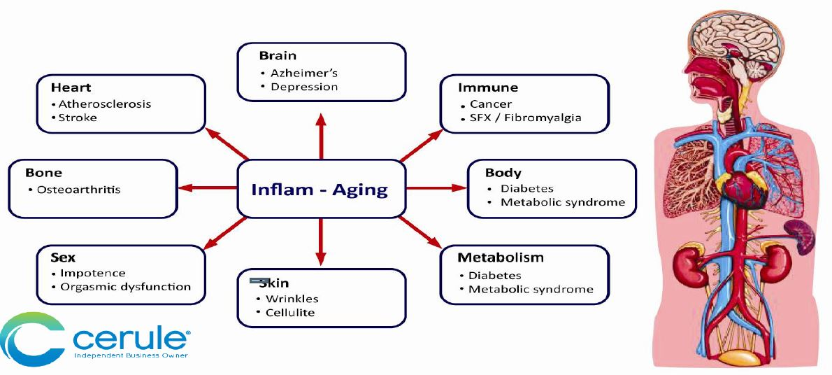 Inflammation Effects